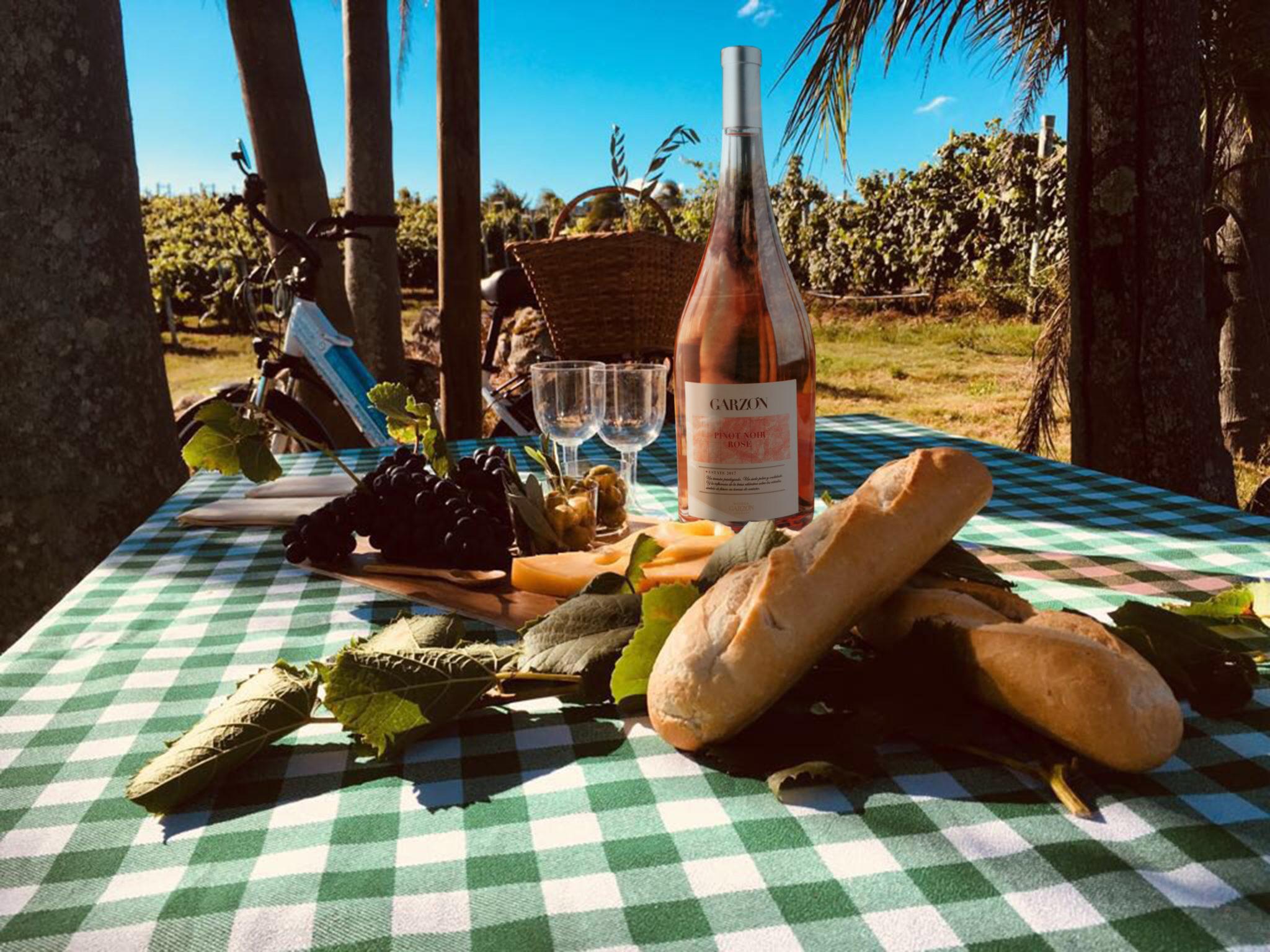 Disfrute de un pícnic entre los viñedos y un recorrido caminando o en bicicleta