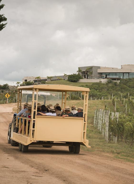Deléitese con la hermosa vista y visite la bodega mientras degusta vinos de la línea Reserva