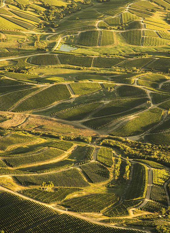 Deléitese con la hermosa vista y visite la bodega mientras degusta vinos de la línea Single Vineyard